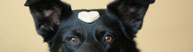 dogged!