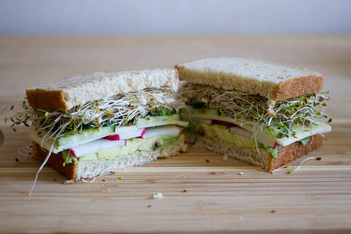 avocado, radish, cucumber, sprout, and havarti sandwich